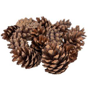 Natural pinecones FairyCones
