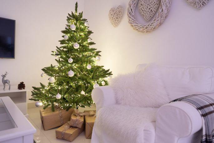 nordmann's fir Christmas tree blog