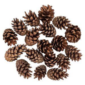 Pine cones FairyCones 18 pcs